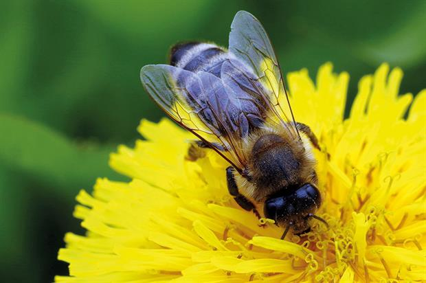 Plants: industry figures maintain that pesticide concentrations are below level that would prove harmful to bees - image: Pixabay
