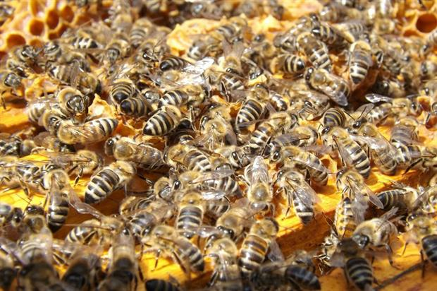 New tool lets beekeepers know when spraying is imminent. Image: Pixabay