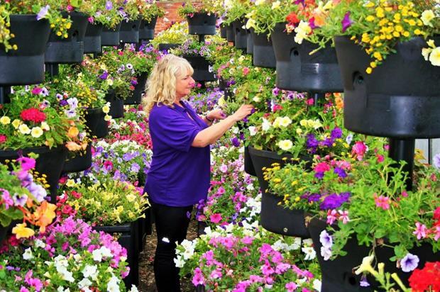 Plantscape's Christine Redfern inspects an order for Blackburn, Lancashire. Image: Supplied