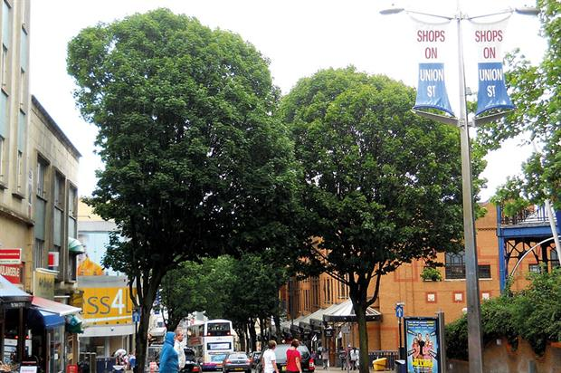Bristol: city council poised to cut street tree maintenance before announcing review along with wider consultation
