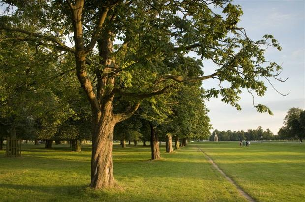 Chesnut Avenue in Bushy Park. Image: The Royal Parks