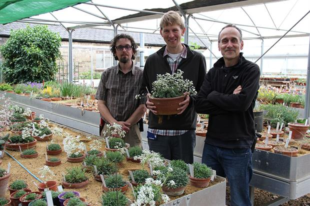 Simon Wallis, Raymond Wightman and Paul Aston- image: Cambridge University Botanic Garden
