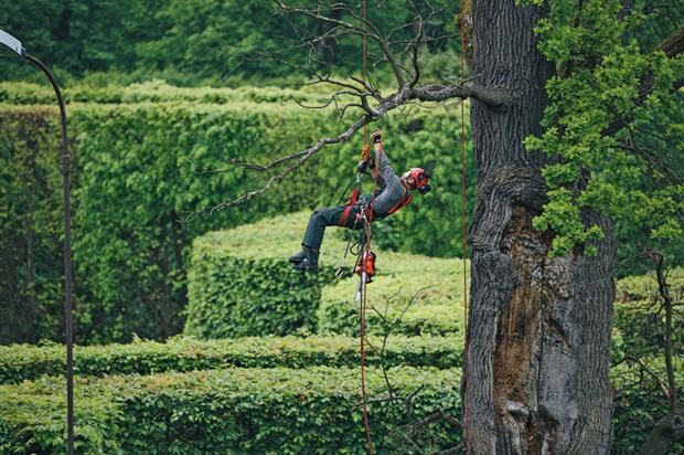 Tree surgeons: petrol-engined chainsaw remains at the heart of operators' business - image: ECHO