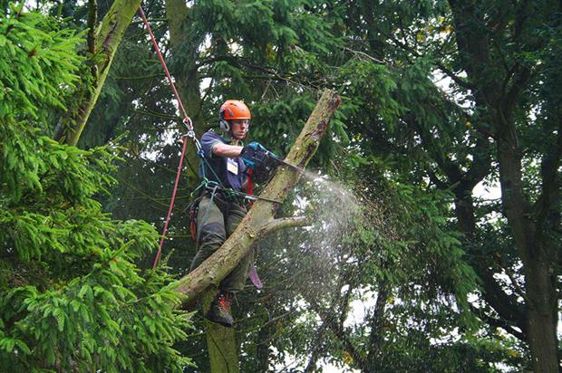 Chainsaws: top-handled models for working in trees should not be used on the ground - image: Makita