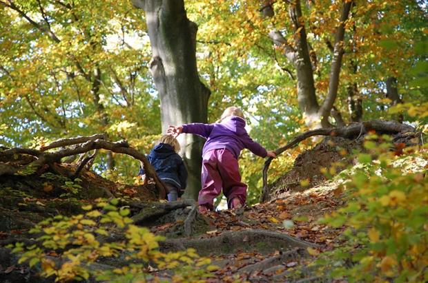 Central Scotland Green Network announces winners of community green space funding. Image: Pixabay