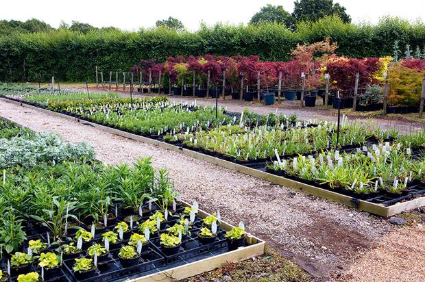 Nurseries: growers offered top dressings and controlled-release fertilisers for crops - image: HW