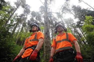 National Trust foresters with the champion tree - image:NT