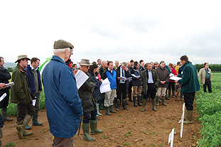 June trials day featured varieties from Syngenta, Crites Seed, Sharpes and Maribo - image: Sue Jupe