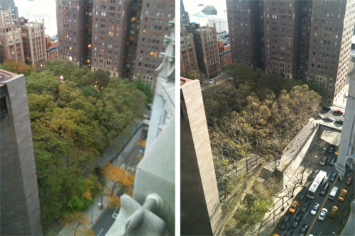 New York: city's trees battered by hurricane — before (left) and after - image: NYC Department of Parks & Recreation