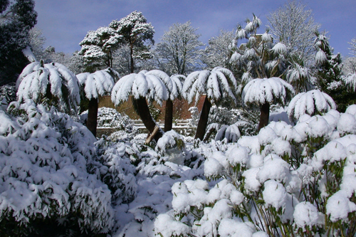 Cold weather threatens plants - image: HW