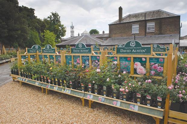 David Austin Roses: company has worked hard to make itself one of the biggest names in the plant export market