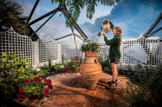 Catherine Cutler in the perfume garden. Image: Eden Project