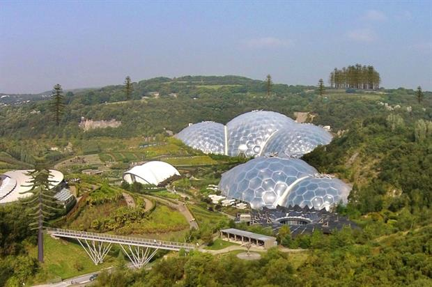 Coast redwoods planted at Eden Project. Image: Supplied
