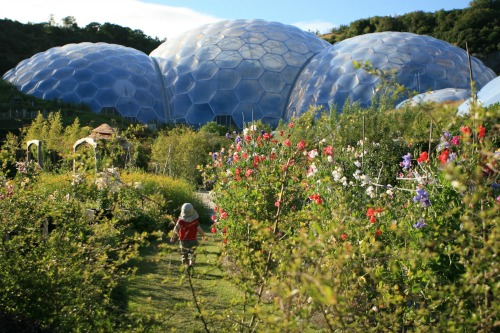 The Eden Project in bloom