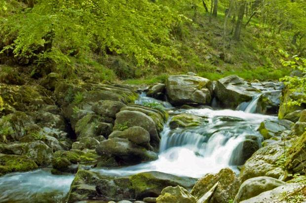 Watersmeet in Exmoor, an Area of Outstanding Natural Beauty. Image: MorgueFile