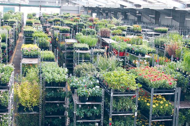 Farplants: sales increase highlights a successful year