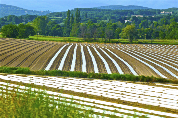 Glyphosate is widely used in agriculture. Image: Pixabay