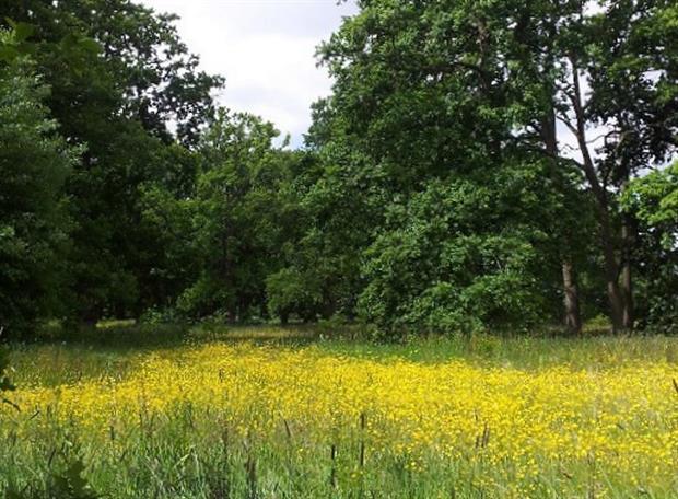 Grafton Wood - image: WTML