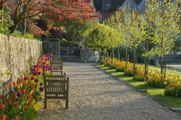 Grandfather's Walk with lime trees. Image: National Trust/Andrew Butler