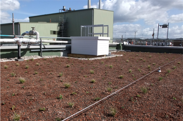 Grangemouth's first biodiverse green roof. Image: Buglife