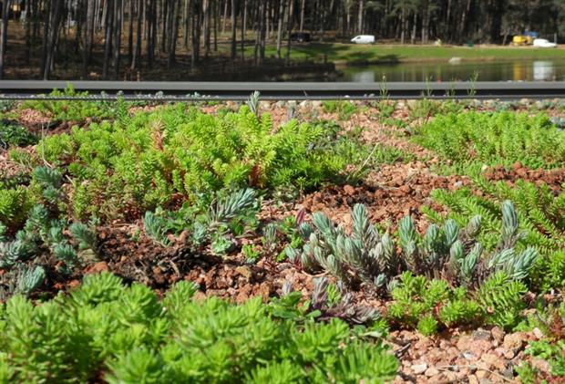 Boningale Greensky's green roof at Center Parcs in Bedfordshire