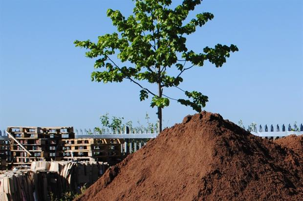 Green-tree topsoil. Image: Supplied
