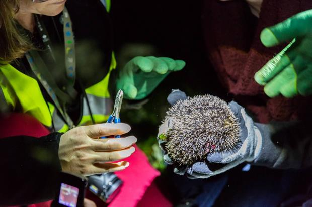 Nocturnal hedgehog study. Image: Matt Haworth/Royal Parks Foundation