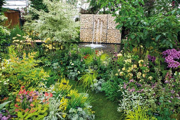 Hillier: stated aim to have majority of plants on its commercial stand at Chelsea available in its garden centres - image: HW