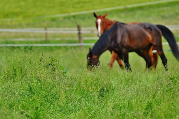 Former horse training site to become parkland. Image: Pixabay