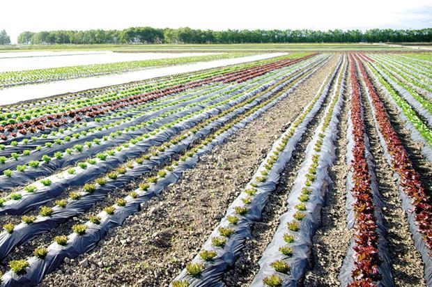 Horticultural fabrics: study covered field performance - image: Yuko Hara