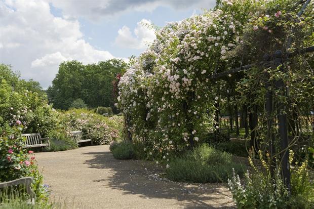 Hyde Park Rose Garden. Image: (C) Anne-Marie Briscombe