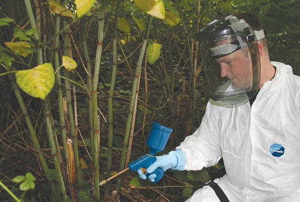 Japanese knotweed: companies offering control services are reporting booming business and a buoyant market