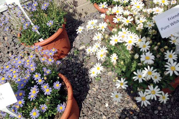 Friends: plants labelled as ideal for out-of-season sales - image: HW