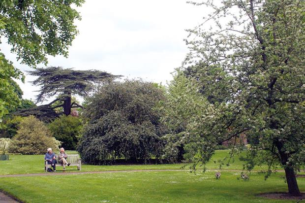 Trees: researchers point to functions including breathing, digestion, problem-solving, vision and even memory - image: HW