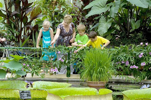 Kew: more than 58,000 visitors in first week of August