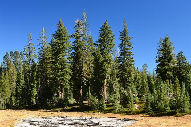 Image: Lassen Volcanic National Park