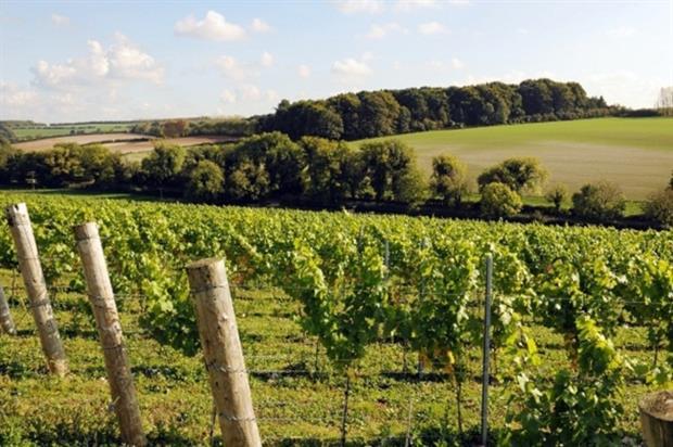 Vines at Leckford Farm - image: Waitrose