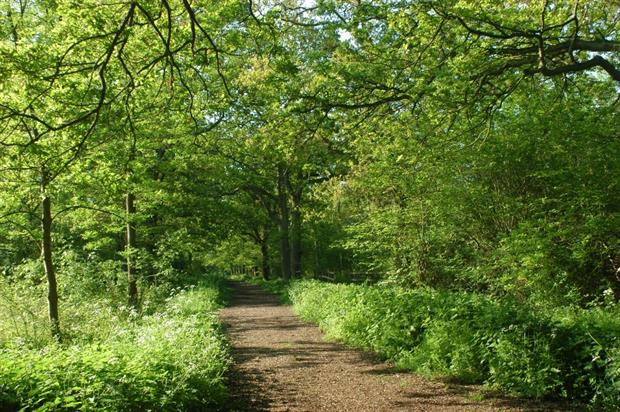 Linford Wood, where some of the first signs of Chalara were spotted. Image: Milton Keynes Parks Trust