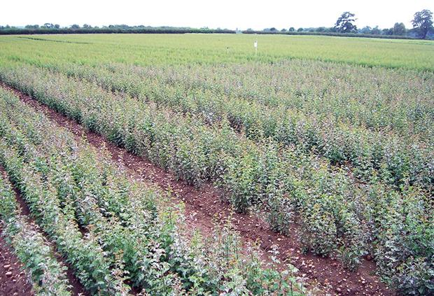 Biocontrols: ADAS suggests use where disease pressure is lower so growers can save stronger fungicides for when really needed - image: ADAS