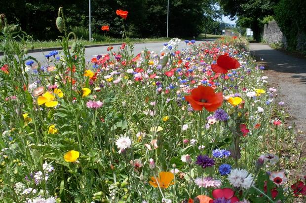 Euroflor flower meadows alongside the Newport to Cardiff road