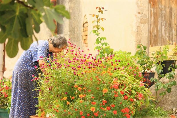 Exercise such as gardening could halve Alzheimer's risk. Image: Pixabay