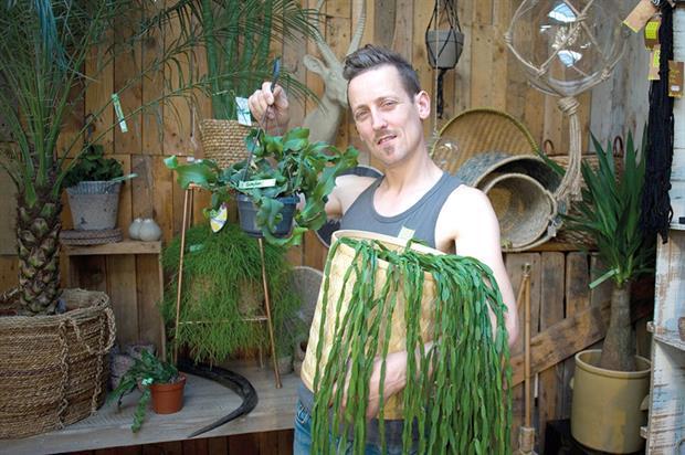 Holt: now selling efig office plant of the year Rhipsalis - image: © 2016 Leela Axon
