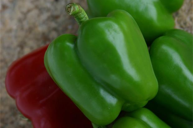 Pennard Plants' Sweet pepper 'Popti' - image: RHS