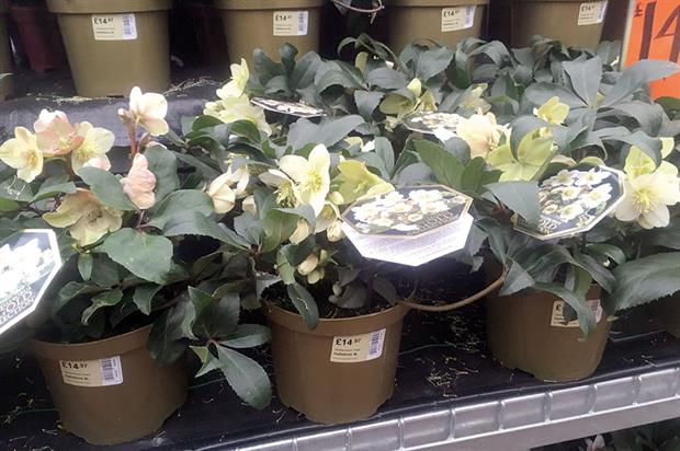 Plants: little change in appetite for Dutch products - image: HW