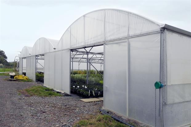 Polytunnels provide enhanced conditions with most suitable light for growth