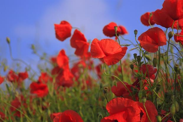 Poppies. Image: Pixabay