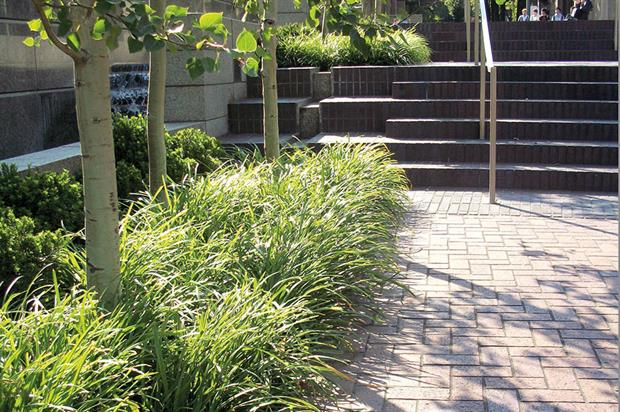 Sustainable drainage: multiple benefits and clear goals - image: Sue Illman