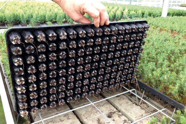 PG Horticulture: specifications for all types of growing and air pruning - image: PG Horticulture