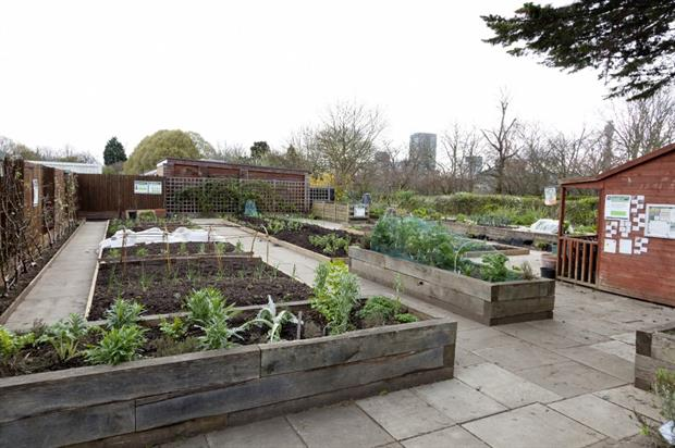 The Regent's Park allotment. Image: Greywolf © The Royal Parks