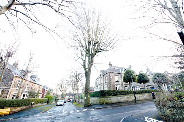 Sheffield: dispute over street tree management triggers calls for greater communication with the general public